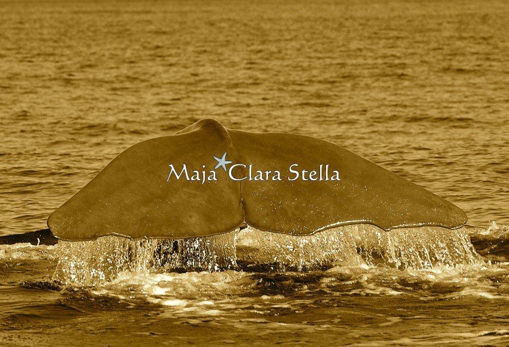 Maja Clara Stella